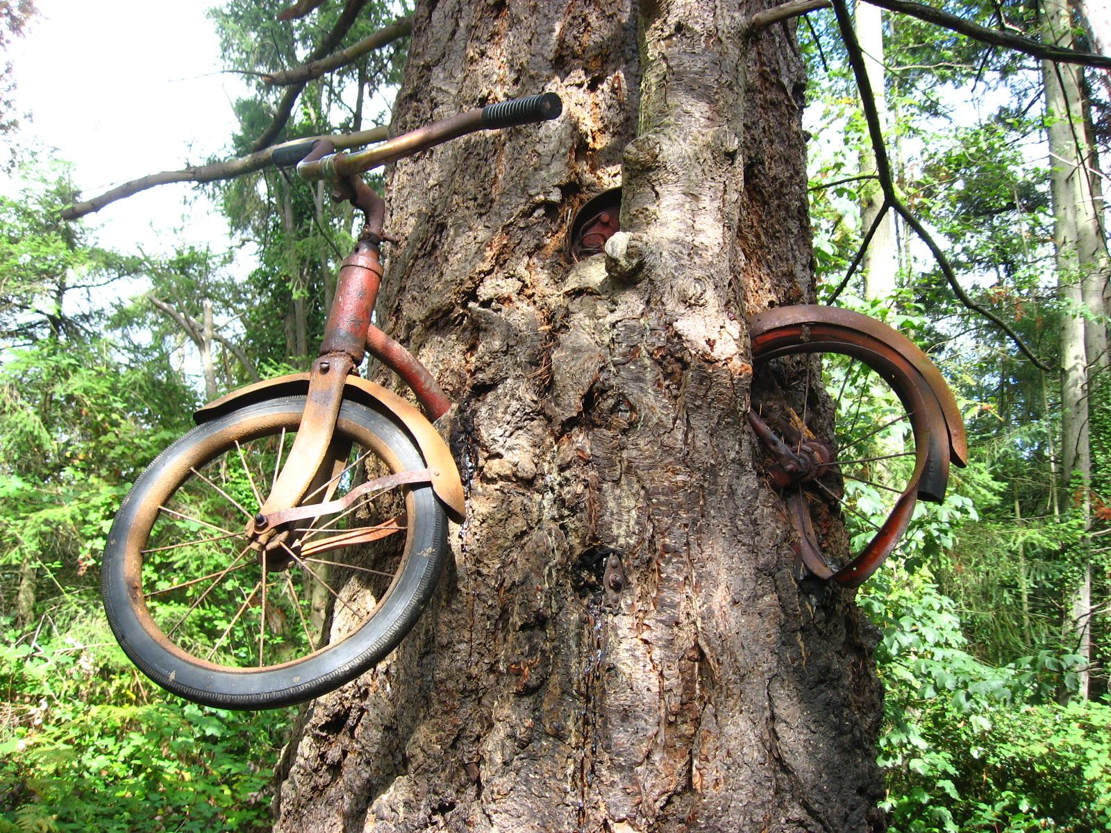 Bicycle in a Tree
