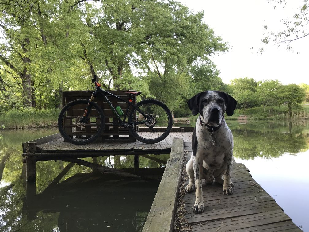 Cycling Dog