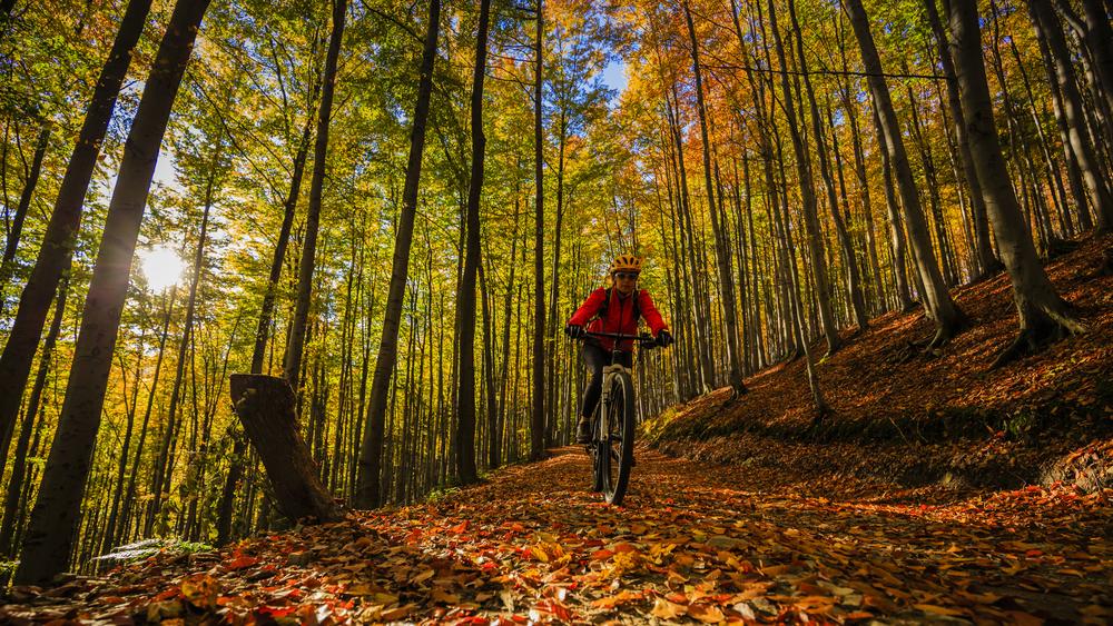 MTB Woods